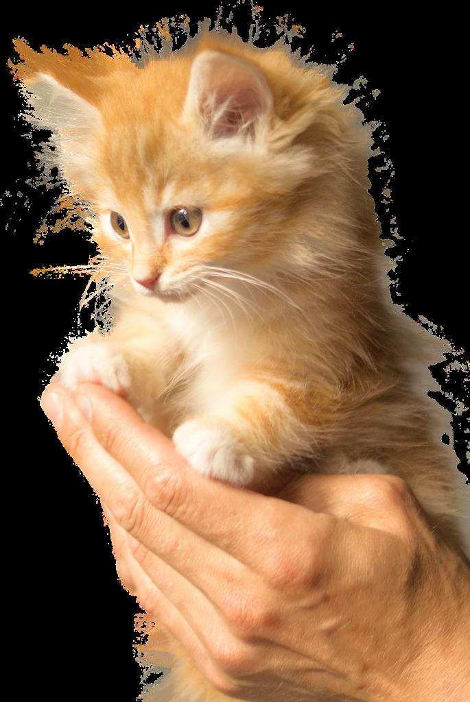 Glückliches und gesundes Kätzchen